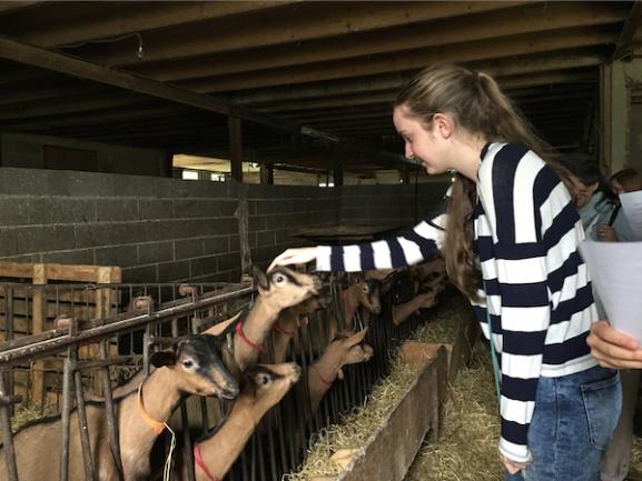 Girl feeding goat at farm